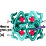 heme groups